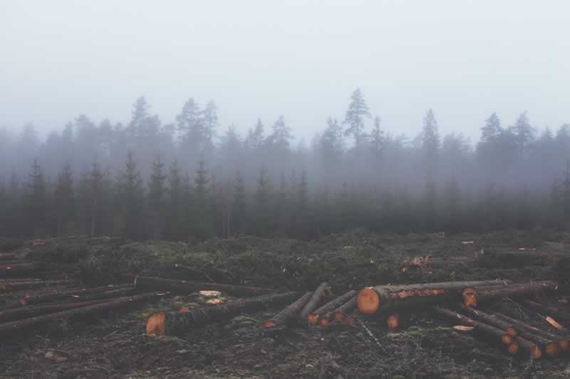 Felled trees on the ground slated for milling