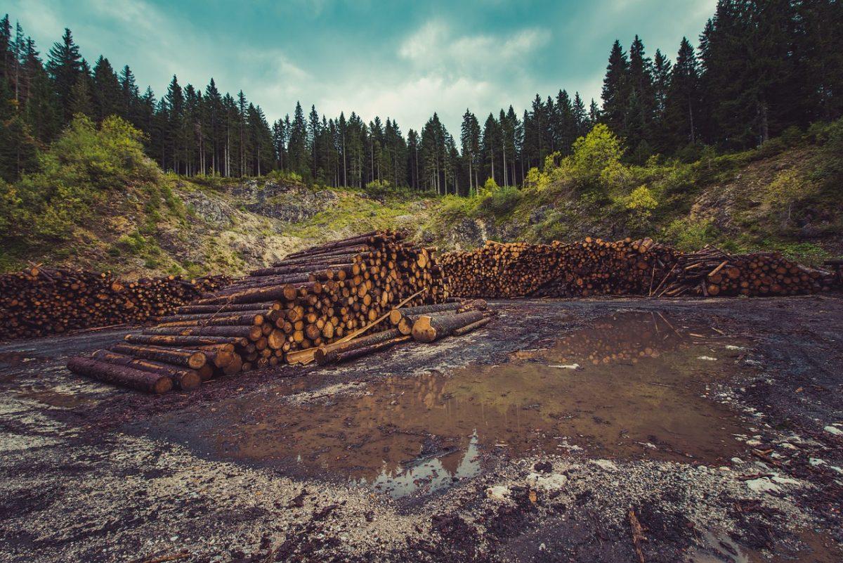 Deforestation Logs Global Warming