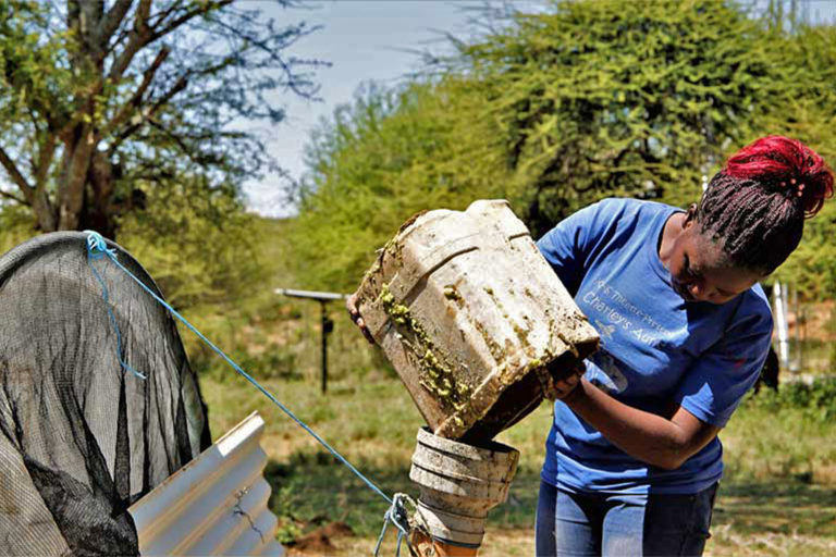 Abigael Hisa Biogas Digester Kenya Invasive