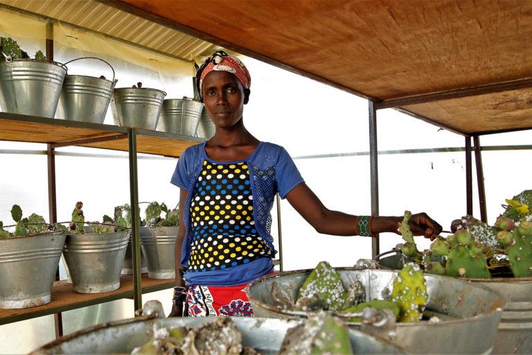 Agnes Mamae Plant Pest Kenya Invasive