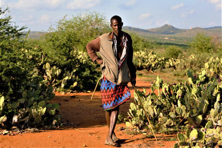 Kamisti Manyas Prickly Pear Thorns Kenya